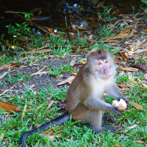 Monkey in Davao
