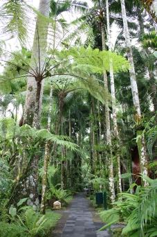 Walking through Ubud