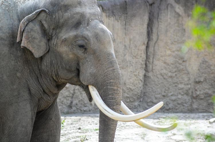elephant-2532803_1920