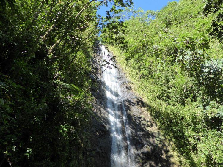 manoa-falls-1204536_1920